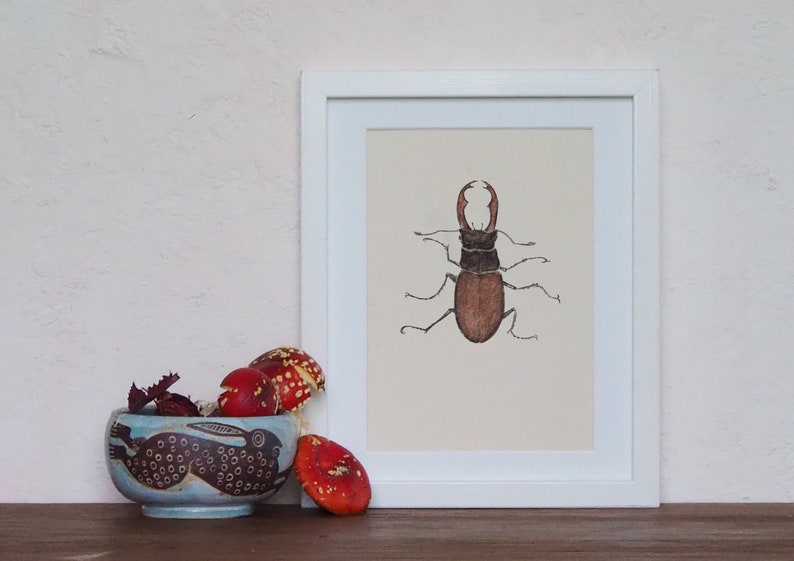 Stag beetle natural history entomology archival print image 0