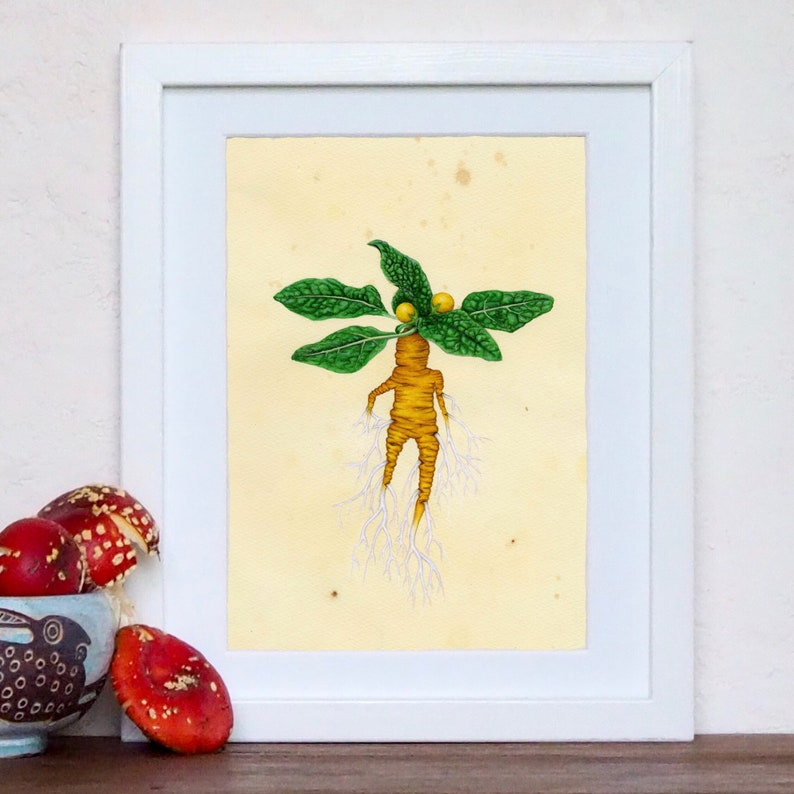 Mandrake mandragora officinarum botanical art print image 0
