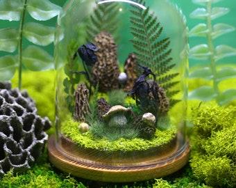 Morel Garden Of Eden