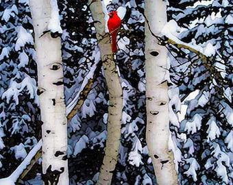Winter Landscape,  Birch Trees, Bird, Red Cardinal, Landscape, Photograph, A Winter's Song, 8x10 archival Giclee print
