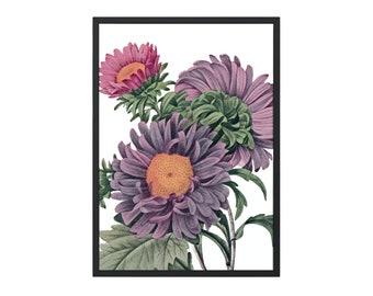 flower watercolor, printable aster painting, flower wall art, asters print, botanical wall art #154 DIGITAL DOWNLOAD