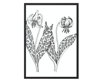 vintage wild flower print, printable eastern trout lily, flower wall art, lily sketch art drawing, botanical wall art #159 DIGITAL DOWNLOAD