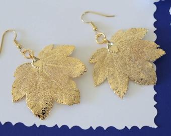 Silver Leaf Earrings, Maple Leaf, Real Leaf Earrings, Small Real Leaf Earrings, Full Moon Maple, Gold PLated leaf, Nature, LESM199