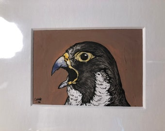 Outraged Peregrine Falcon!