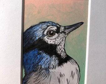Sunrise Blue Jay