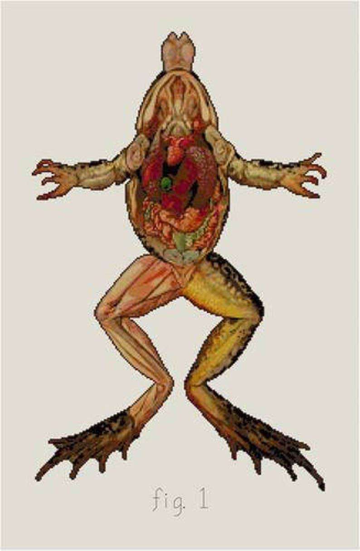Frog Anatomy Dissection Cross stitch pattern PDF Biology