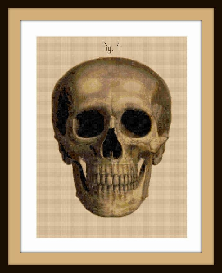 Antique Skull Front View Cross Stitch Pattern Pdf Anatomical Etsy