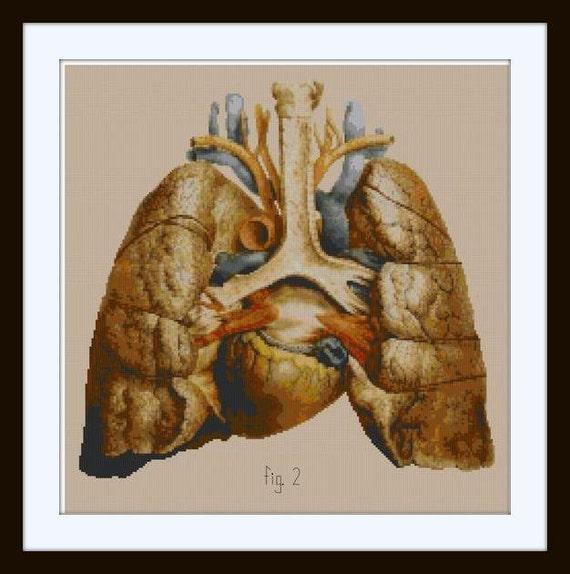 Anatomical Human Lungs and Heart Cross stitch pattern PDF / | Etsy