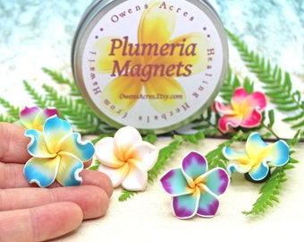 PLUMERIA MAGNETS / Fimo Clay Plumeria Magnets / Plumeria Flower / Gift Set / Fridge Magnets / Made in Hawaii Gift
