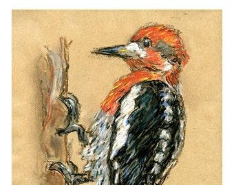 5x7 print woodpecker - bird art mixed media drawing