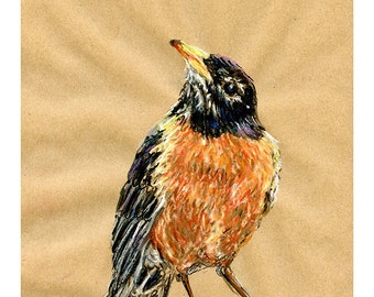 Robin 8X10 9X12 or 11X14 print - Bird Art Pastel Mixed Media Drawing