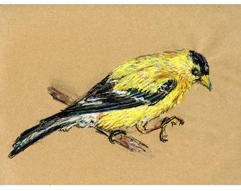 5x7 print Goldfinch - Bird art mixed media drawing