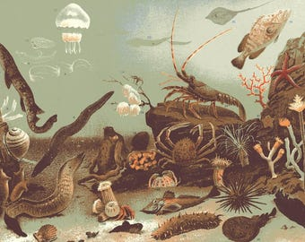 MARINE LIFE SEA Creatures Original Full Page 1896 Engraving from 1920s Reference Book