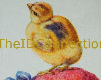Vintage Easter Postcard, Chick, Peep, Vintage Easter Egg Postcard, Easter Peep, Chick, Red Rose Easter Egg, Holiday Decor, Folk Art