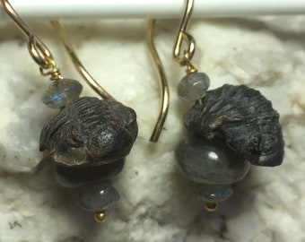 Insouciant Studios Perched Trilobite Fossil Earrings