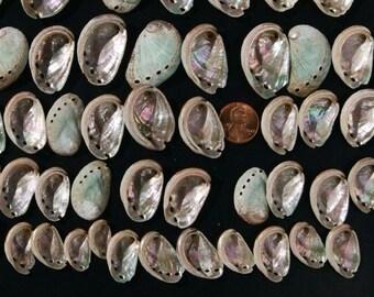 3 Dozen Assortment of Small Abalone Shells, Plus a Bonus Gift of These Beauties
