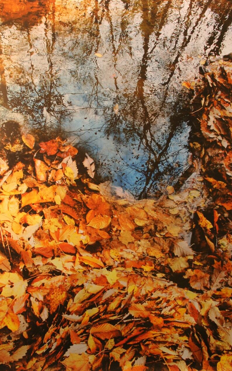 autumn art #Fall photography #Fine art photography nature photography Fall decor Metallic photo paper fine art photography On the edge