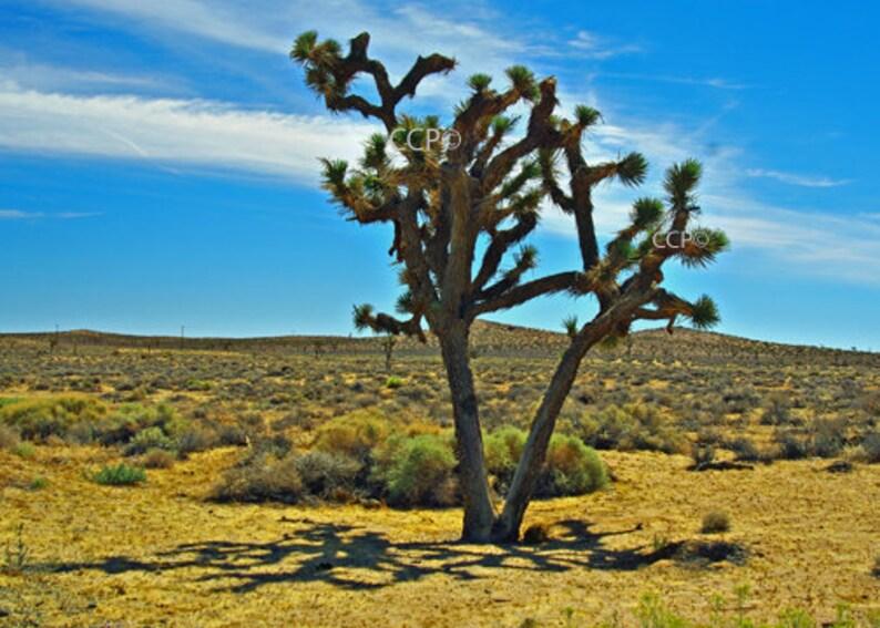 Joshua Tree Mojave Desert Photography Nature Print Etsy