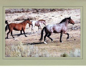 Wild Horses in Eastern Oregon note card or greeting card