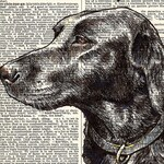 Custom Drawing + Print: Pet or Portrait Dictionary Page