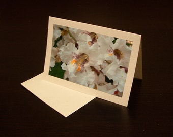 Cluster of Catulpa Blossoms (photo card)