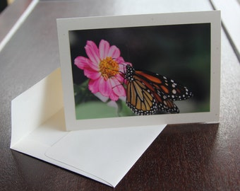 Monarch Butterfly (photo card)