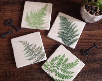 Fern Botanical stone coasters