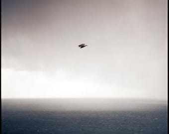Ring of Kerry Seas, Analog Photography Print, Limited Edition, Dark Blue, Landscape, Large scale Art, Ireland, Ocean, Sea, Seagull, Bird Art