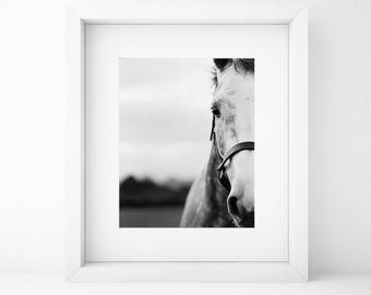 Fine Art print, White Horse, Animal, Ireland, Art print, Large print, Mountains, Home, Office decor, Black and white, Analog Photography