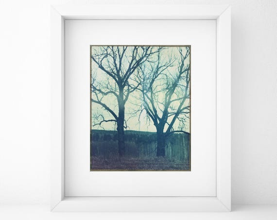 Norway, Old Polaroids, Polaroid Photography, Autumn, Eerie, Woods, Two Trees, Type 79, Landscape Photography, Trees, Curious, Norwegian