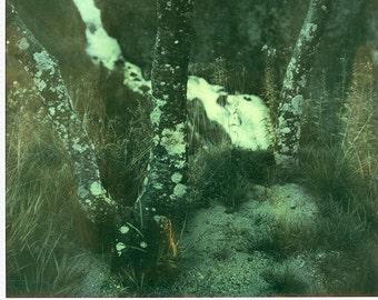 Norway, Old Polaroids, SX70, Polaroid Photography, Waterfall, Trees, Vintage, Photography, Mountains, Birch, SX 70, Original, Landscape