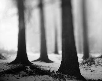 Winter Misty Forest, Photography, Nature, Print, Analog, Curious, Landscape, Large, Mist, Trees, Foggy, Cold, Nature, Fog, Whimsical Decor