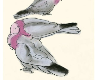 "Australian Bird art print - Galah parrots - 4"" x 6"" - 4 for 3 SALE"