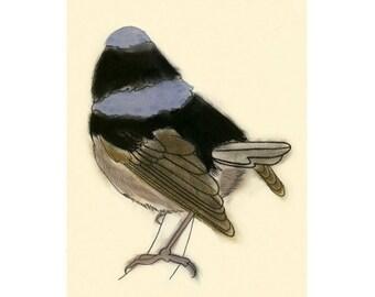 Superb blue wren - fairy wren bird art - Dean -  4 X 6 print