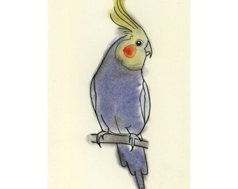 Australian Bird Art Drawing - Little Cockatiel -  4 X 6 print - 4 for 3 SALE