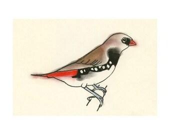 Australian Bird Art - 4 for 3 SALE Nathan the Little diamond firetail finch -  6 X 4 print