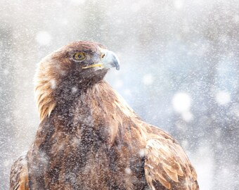 Eagle photograph, golden eagle, winter photography, snowy landscape, bird print, brown feather, early winter, rustic decor, cottage