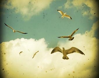 ON SALE Apartment Therapy bird print avian photo gulls seaside floating birds cream clouds summer sky - Ocean's Call 10x10