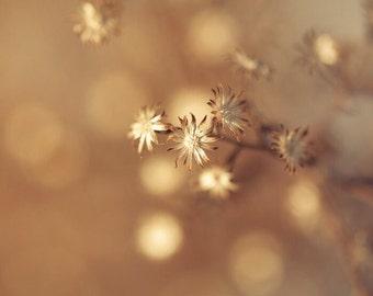 Honey gold, harvest gold, winter flowers, copper, bronze, bokeh flowers, bokeh bubbles, cream, stars, shades of brown, Montreal winter