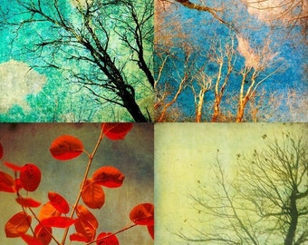 Tree photography, bold colors, autumn, rustic decor wall art by bomobob- Four Trees 4 8x8 prints
