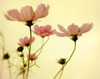 Autumn flowers photography cosmos coral pink mustard yellow pastel flower photography fall garden shabby chic decor feminine