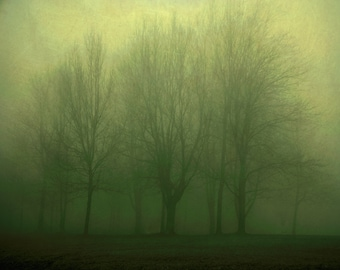 Landscape photography, green trees, emerald green, wall decor enchanted forest bare trees avocado green fall Early 8x10