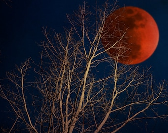 Halloween decorating, nature photography, lunar eclipse, moon photo, bare trees, blood red moon, haunted forest, citrus, blood orange
