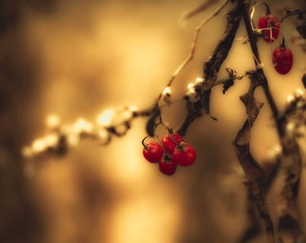 Winter photography red berries coffee brown harvest gold nougat rustic decor nature photography bokeh caramel