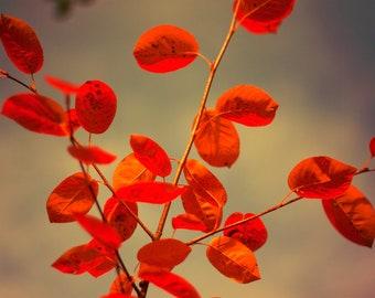 Autumn leaves October 8x10 photo alder tree crimson scarlet bronze copper ruby red twilight gold halloween gothic  bomobob