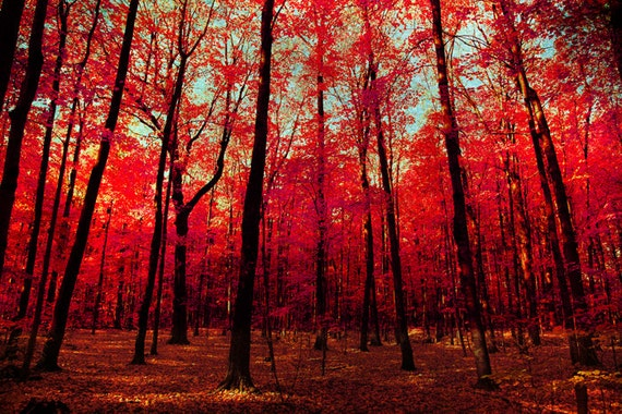 Herbst Herbstlaub Fotografie Roten Scharlachrot Rubin Etsy