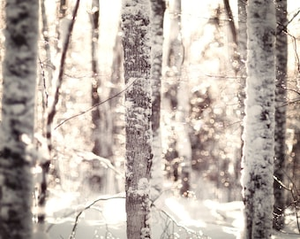 Snow photography, snowy forest, bokeh, ice, winter, trees, glitter, reflections, droplets, nature photo, snowshoeing, skiing