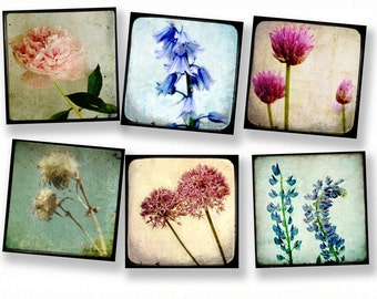 Flower photography nature photogrphy TTV print collection summer flower power vintage inspired - Set of 6 5x5 prints TTV Flowers