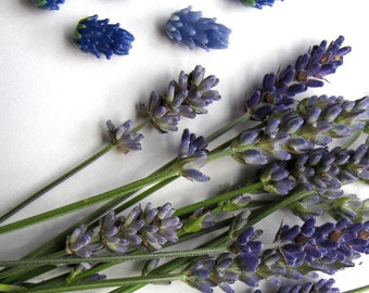 Harvest Sale Miniature Lavender Glass Beads set of 7 in Periwinkle and Dark Blue in Lavender Sachet Buds and GIft Box