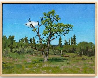Quercus Garryana in the Rogue River Preserve